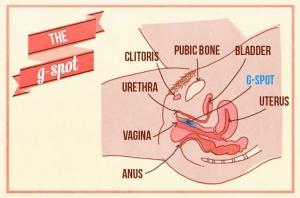 How to masturbate with a vulva Main Image